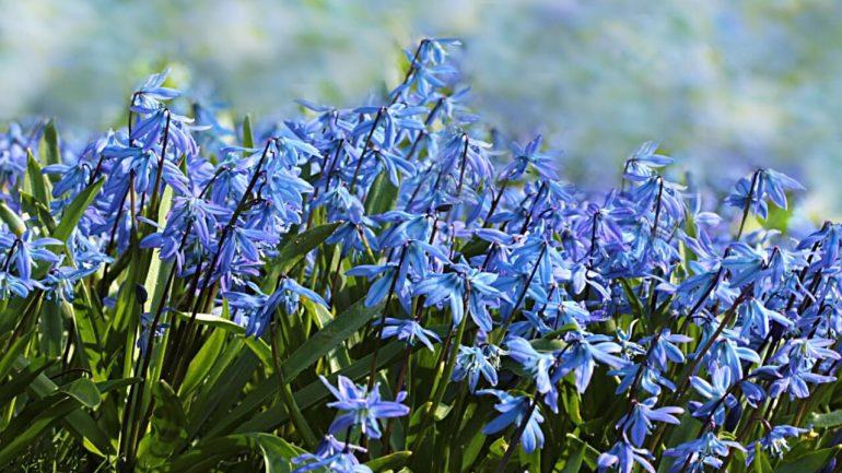 Výsadba jarných kvetov: Práve teraz je ten správny čas