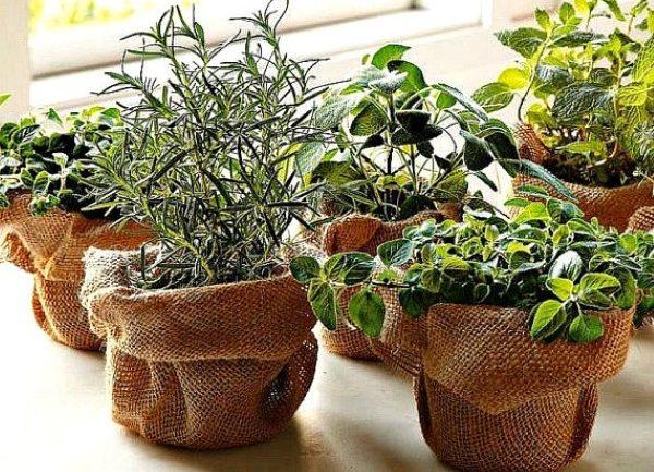 Kreatívne nápady na pestovanie byliniek v interiéri