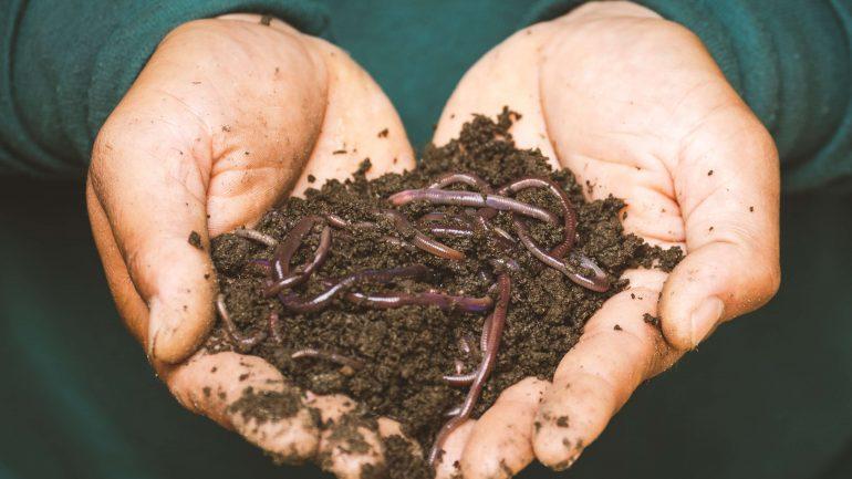 Vermikompostovanie: Ako využiť dážďovky v záhrade
