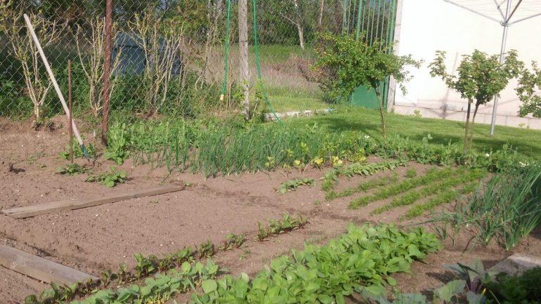 13 najčastejších chýb, ktoré robia záhradkári, časť I.