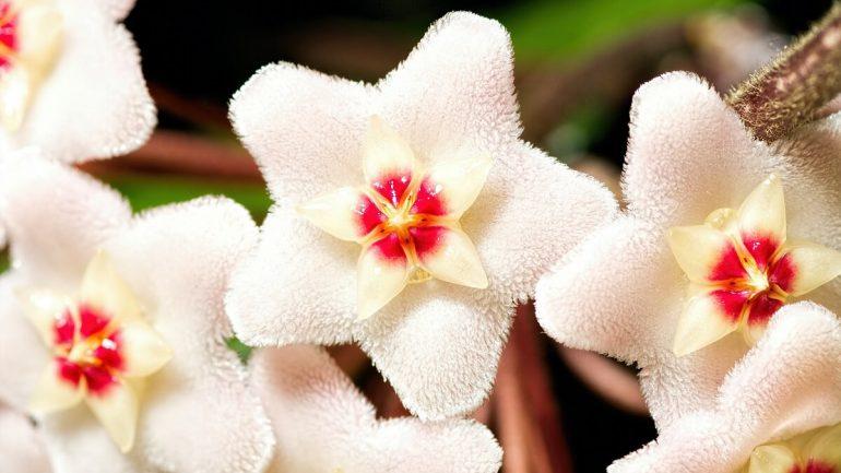 6 najdrahších izbových rastlín