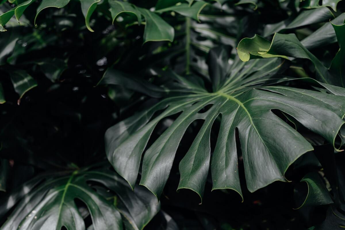 6 najdrahších domácich rastlín
