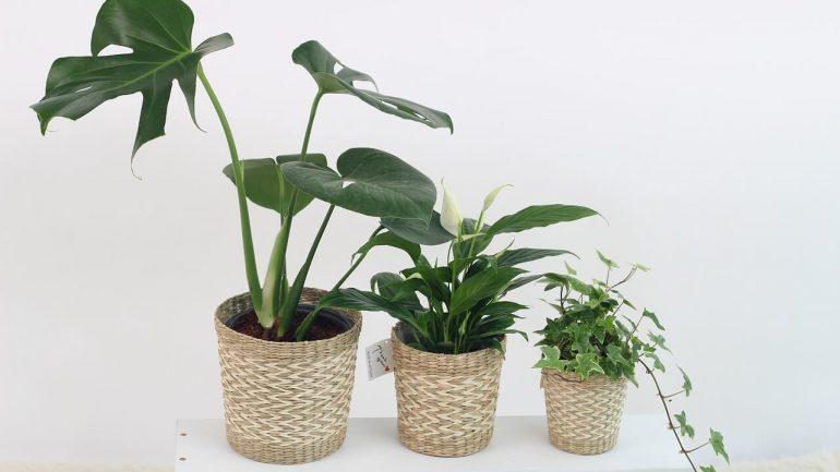 10 vnútorných rastlín, ktoré nepotrebuje veľa slnka