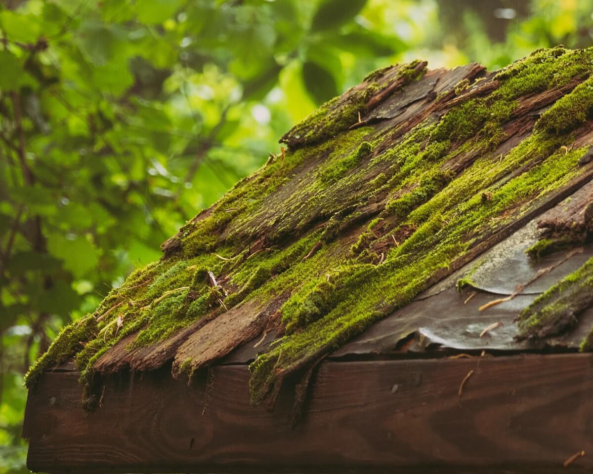 ako odstrániť mach na streche