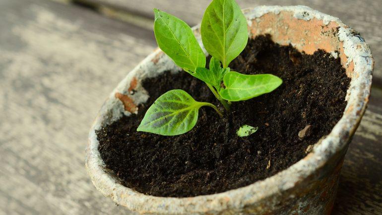 Ako rozmnožovať rastliny z odrezkov