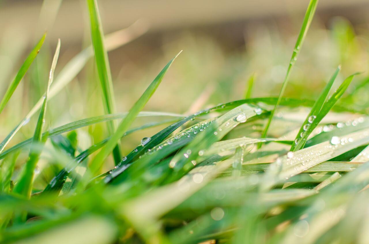 tráva, trávnik