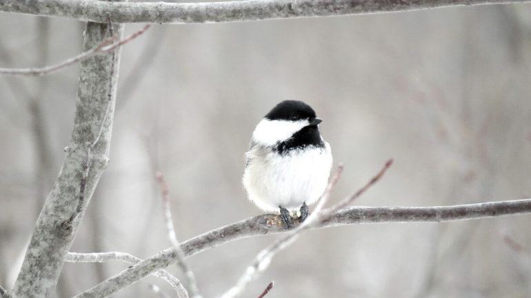 Ako prilákať vtáky na záhradu