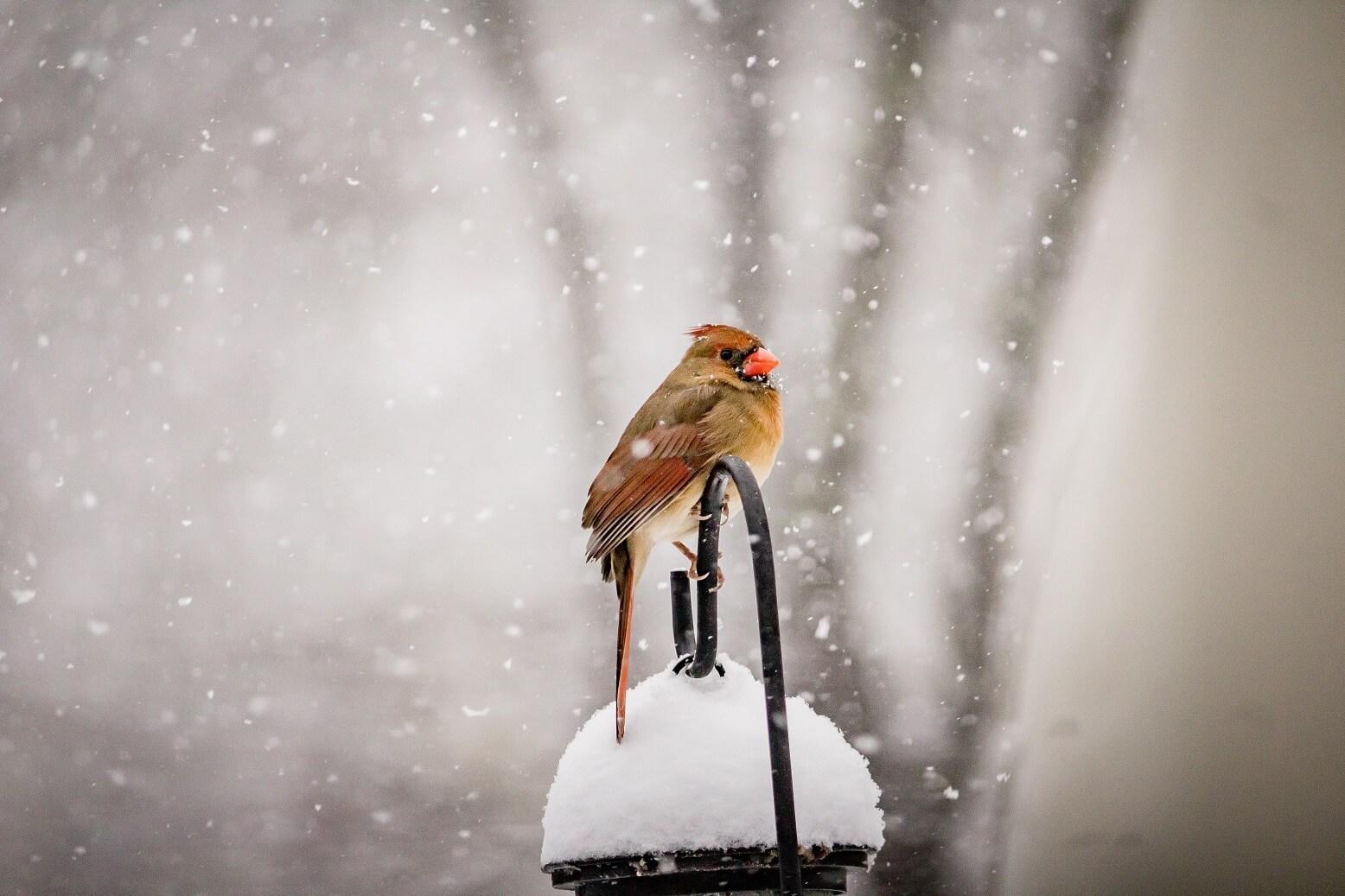 ako prilákať vtáky do záhrady