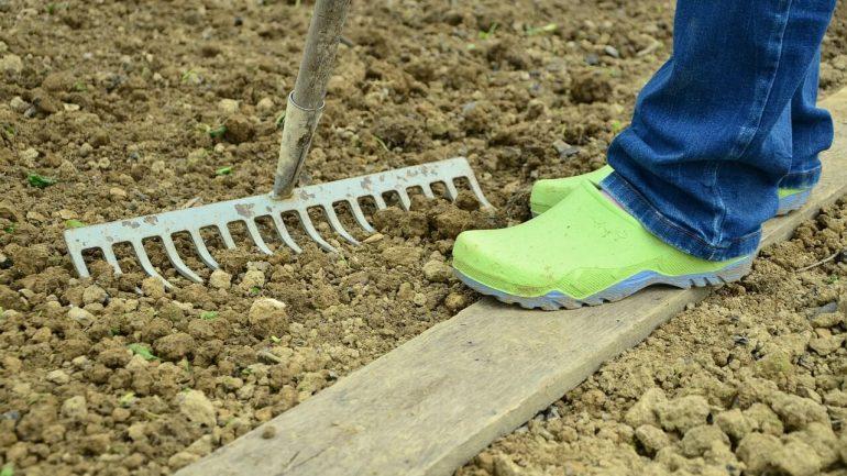 čo treba urobiť pred výsadbou na záhradu
