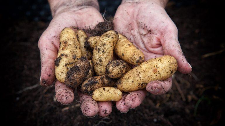 Ste začiatočníci? Tieto nenáročné plodiny vám prinesú úrodu