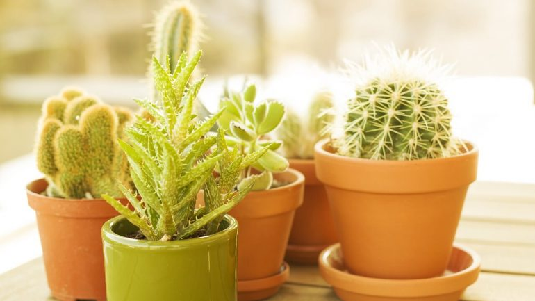 presádzanie rastlín a vhodné kvetináče