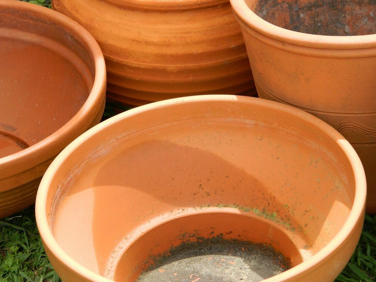 presádzanie rastlín, manuál pre začiatočníkov