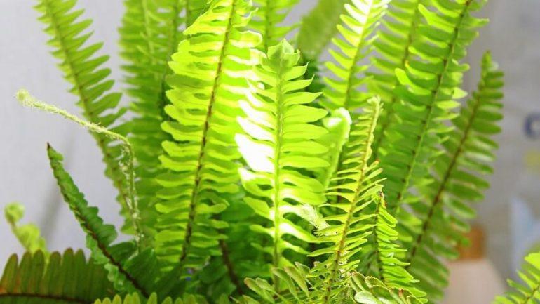 NASA tvrdí: Tieto izbové rastliny vám prefiltrujú vzduch