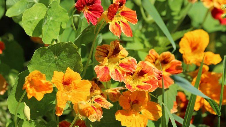 Čo treba sadiť v máji: Tu je záhradnícky kalendár