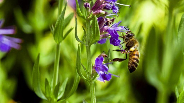 Ktoré liečivé rastliny sa hodia do tienistej záhrady