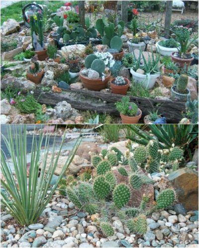 Kaktusová skalnička