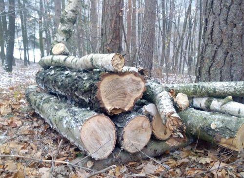 Dekorácia z brezy