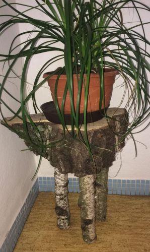 Kvetinový stolček z brezy