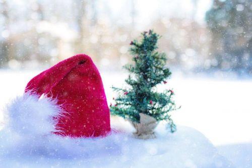 vianočný stromček na chladnom mieste
