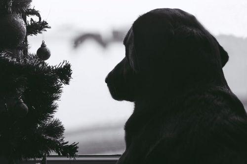bezpečnosť vianočného stromčeka